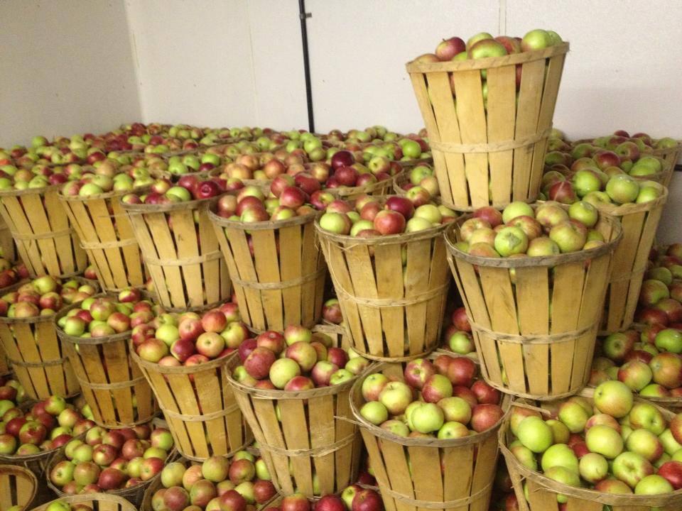 Tydeman Red Apples