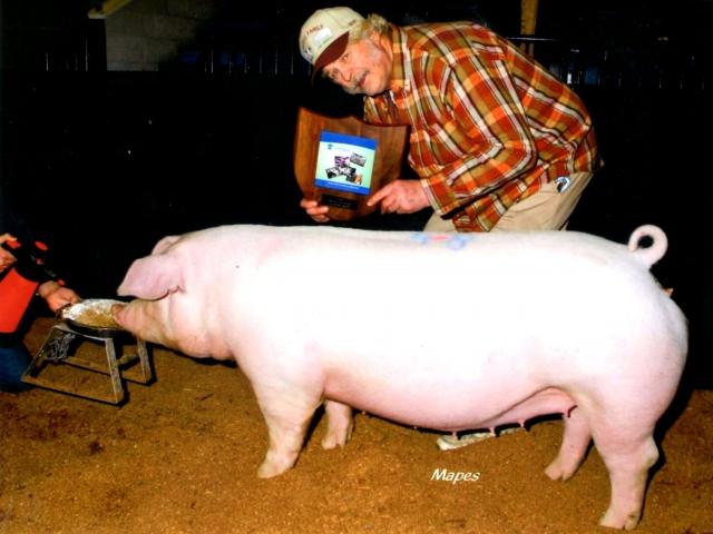 Champion Chester White 2013 PA Farm Show