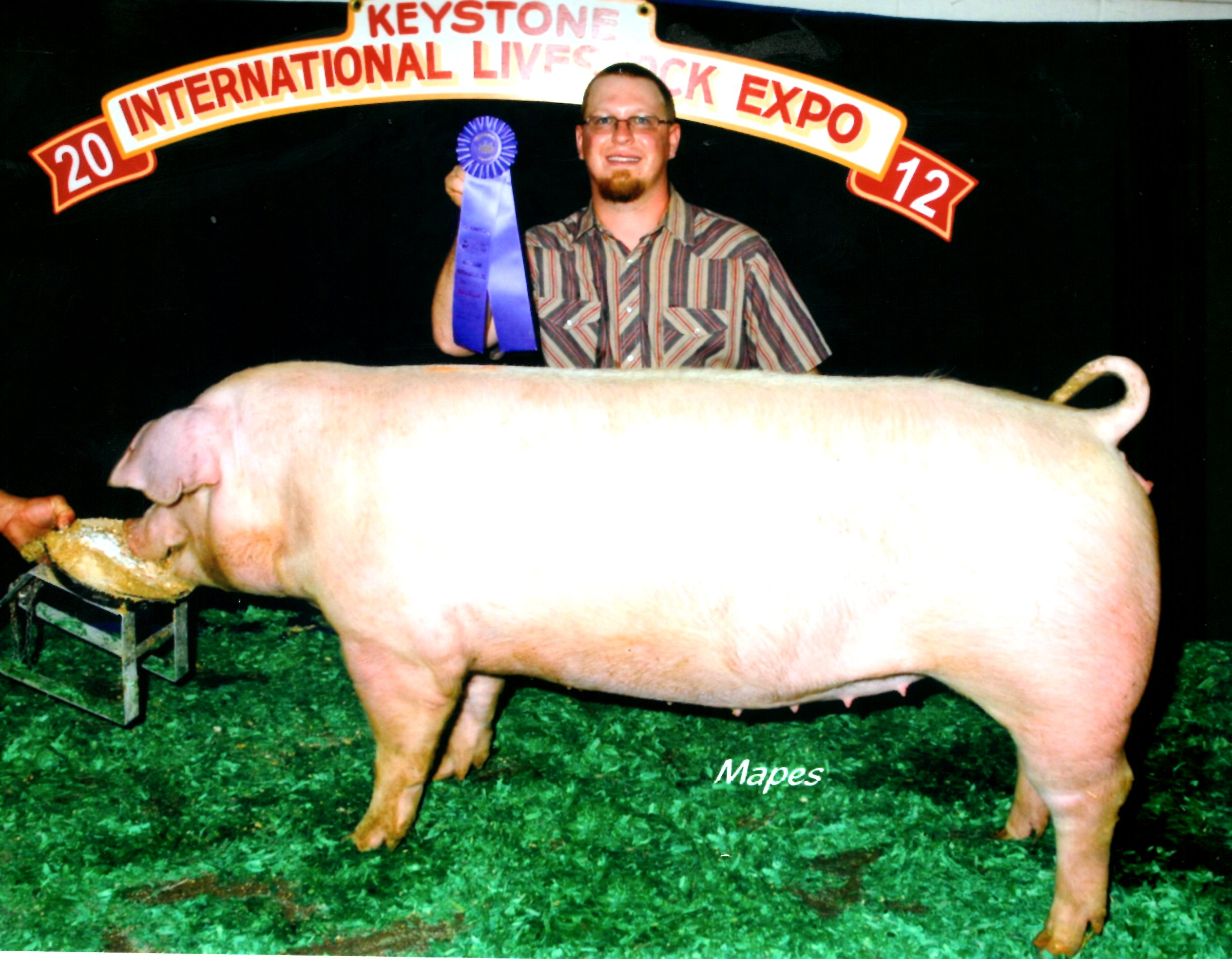 Champion Landrace Gilt 2012 KILE