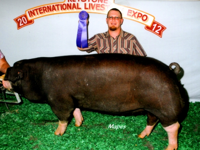 Champion Poland China Gilt 2012 KILE