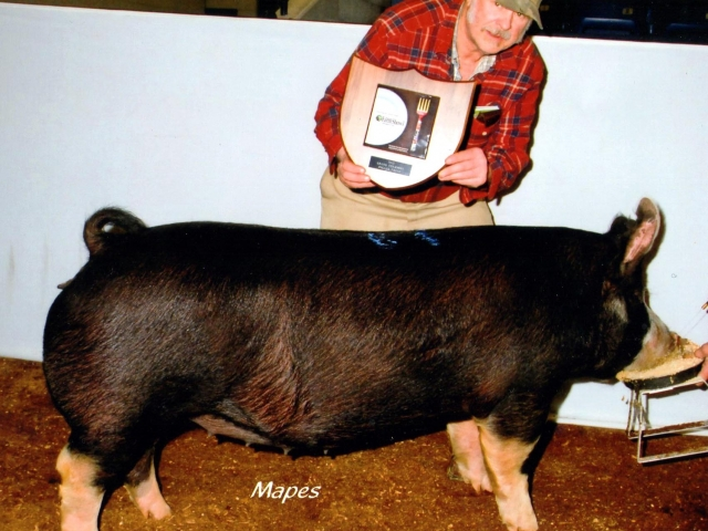 Grant Lazarus with 2012 Farm Show Champion Berk Bred Gilt