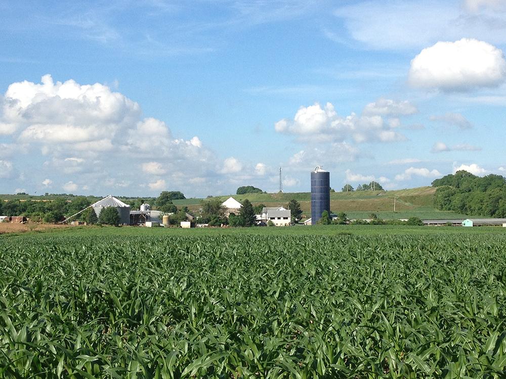 Lazarus Farm
