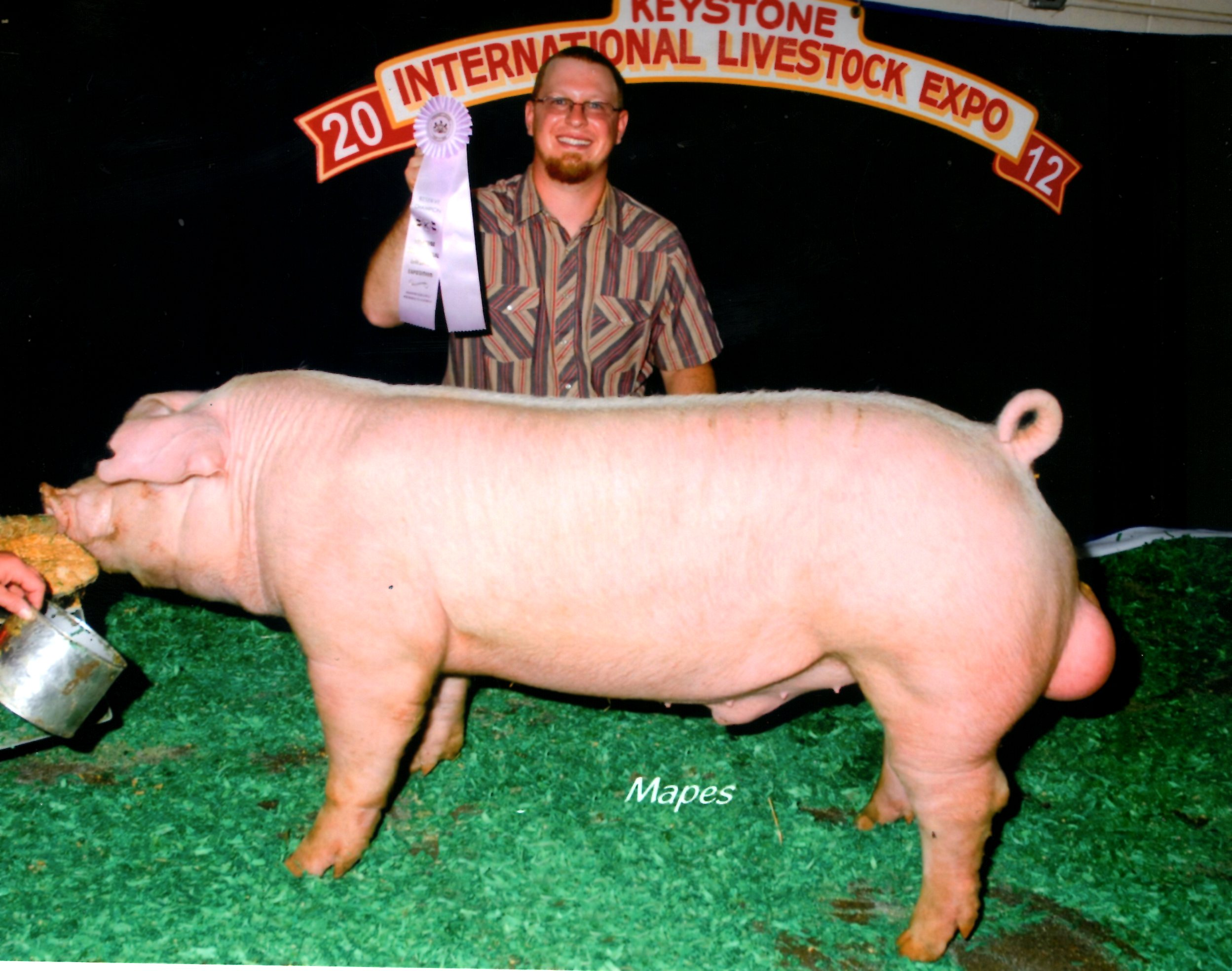 Reserve Champion Chester White Boar 2012 KILE