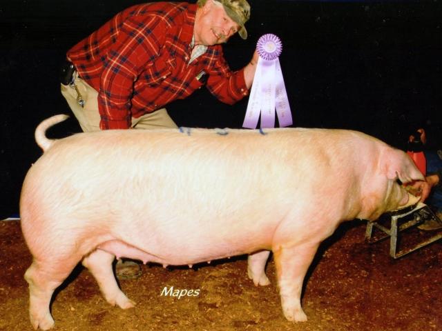 Grant Lazarus with 2012 Farm Show Reserve Champ. Landrace Bred Gilt