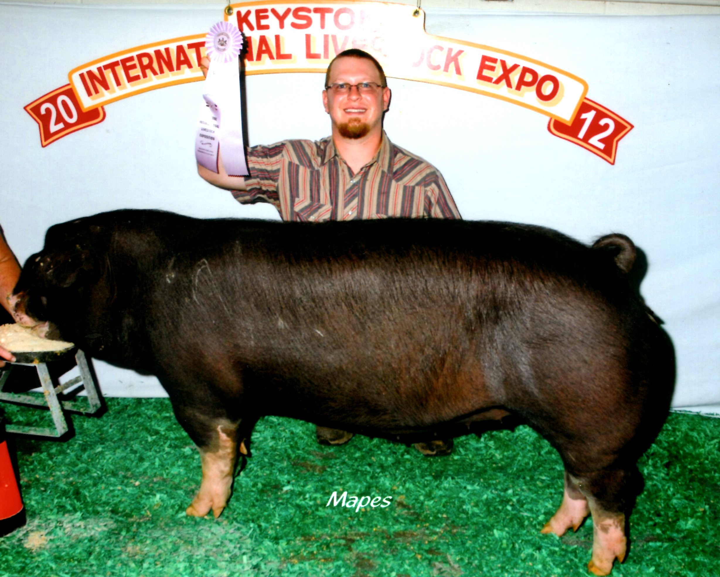 Reserve Poland China Gilt 2012 KILE